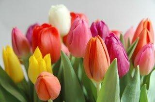 non regalare fiori