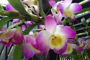 Test orchidea