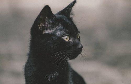 gatto nero e legge di attrazione